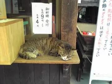 社務所の猫