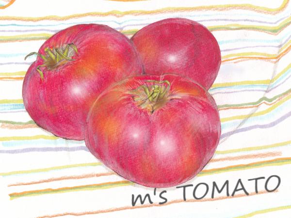 おっちゃんの完熟トマト