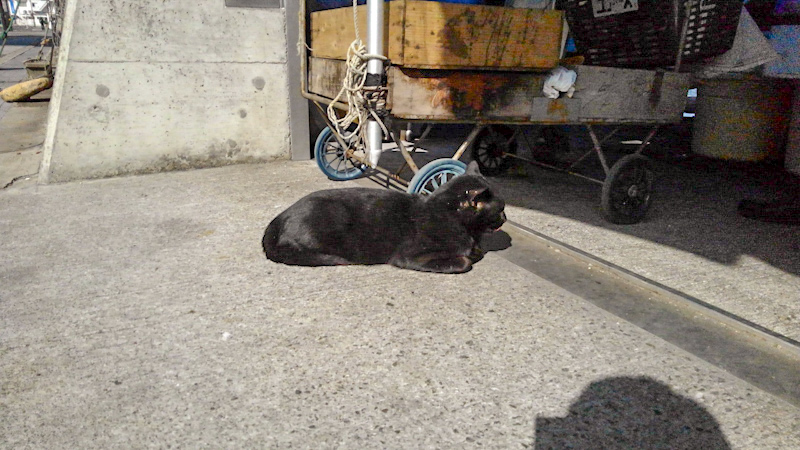 港町 猫-2