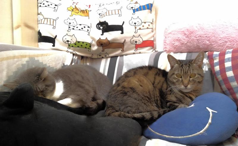 道頓堀保護猫カフェ1