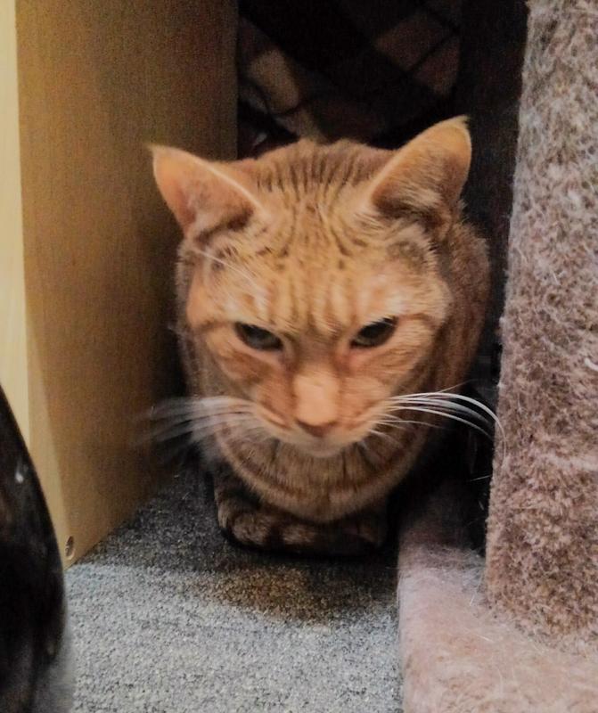 東道頓堀保護猫カフェ2