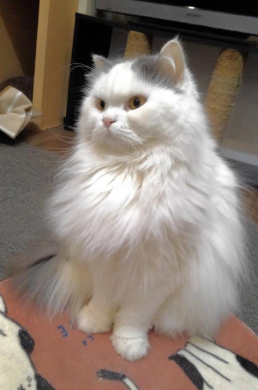 東道頓堀保護猫カフェ5