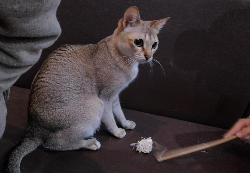 スタッフ猫さん